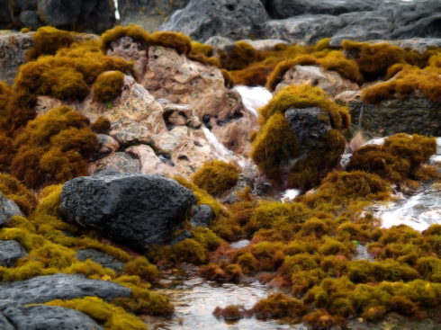 Ocean Rocks soft email